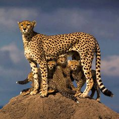 That's a very proud mama.