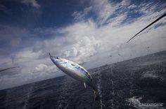 Tuiteractúa/ Pide a Cañete que apoye la pesca sostenible | Greenpeace España