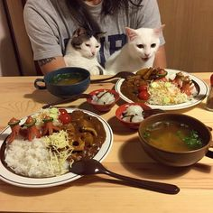 One cat looks more psyched for dinner, or is it just me?