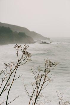 p e l a g i c • | the sea | ᵩ