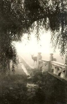 """DEER EMERGING FROM FOG """"TAISHO PICTORIAL PHOTOGRAPHY"""". The pictorialism movement in Japan reached its peak during the reign of EMPEROR TAISHO (1912-26)  Okinawa Soba, via Flickr"""