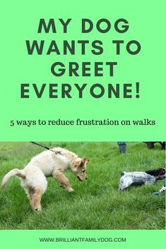 Is your dog over-enthusiastic about other dogs? Help here to give your hound better manners! @KaufmannsPuppy