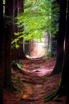 Game of Roots;..by Lars van de Goor