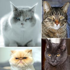 Pictures of Cats Making Judging Faces
