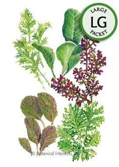 Plant mustard greens outdoors from the 2nd to 4th week of March.
