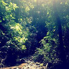 Pura Vida #costarica  (at Bosque Del Cabo)
