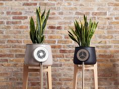Clairy is an incredible smart flowerpot and natural air purifier powered by real plants. It will also be the most beautiful design object you will ever have Which is your favorite? by gadget_expert Home Design, Design Ideas, Self Sustaining Terrarium, Natural Air Purifier, Start Ups, Real Plants, Potted Plants, Arduino, Geek Chic