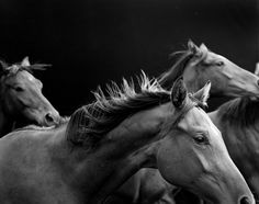 Neil Latham's study of racehorses, shot at rare proximity and at all hours, reminds a longtime racing fan of the animals' majesty.