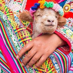 Tag comment or double click if you find this little friend lovely!  REPOST>> @experienceperu  When you realize the weeks almost over and you're that much closer to your South America trip!  Put a smile on a friends face tag them below! Shot in Cusco Peru.  Photo by @misterweekender via @visitsouthamerica_. #ExperiencePeru #placeok #travellers #travelbloggers #travelblog #travelinspector #travel #awesome #cute # #picoftheday #happy #bestoftheday #igers #amazing #followme #like4like #repost…