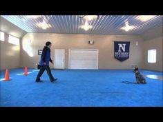 Blu'Bell (Australian Cattle Dog) Dog Training Video - http://www.baubaunews.com/bau-blog/blubell-australian-cattle-dog-dog-training-video/ http://img.youtube.com/vi/P0SMSQTm7MA/0.jpg