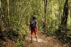 Kinabalu Nationalpark – Unser Tagesausflug zum höchsten Berg Malaysias