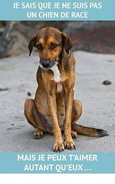 Rien ne vaut un gentil batard !!!! Car il n'y a pas de différence... C'est un chien il t'aime autant si toi tu es gentil avec lui !
