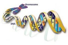 DNA evidence is explained in this article from HowStuffWorks. Learn about DNA evidence. Ancestor Search, Dna Molecule, Forensic Science, Intelligent Design, Forensics, Biotechnology, Genetics, Family History, Genealogy
