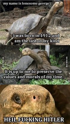 """Pepe's great grandfather Lonesome George preserving the values and morals of his time proclaims """"Heil Hitler"""" Funny Pictures With Captions, Funny Picture Quotes, Funny Images, Best Funny Pictures, Funny Jokes, Hilarious, Dystopian Future, Most Asked Questions, Snapchat Text"""
