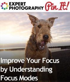 Improve Your Focus by Understanding Focus Modes With an ebook for help understanding.