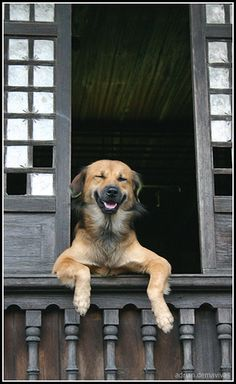 """Smiling Dog"" ---- [Photograph by acermate433s (Adrian Demavivas) - September 17 2006]'h4d'120828"