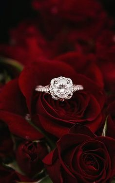 42 Top Round Engagement Rings: Best Rings Ideas %%page%% %%sep%% %%sitename%% Wedding Picture Poses, Wedding Rings, Wedding Stuff, Dream Wedding, Best Engagement Rings, Morganite Engagement, Rings Cool, Or Rose, Diamond Rings