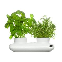 Sagaform watering pot keeps your herbs fresh and tidy. Watering the herbs is easy thanks to the pot´s design: one corner is open and allows you to pour water in. Luz Natural, Houzz, Bouquet Champetre, Plastic Plant Pots, Pot Pasta, Herb Pots, Pot Sets, Housewarming Party, Dot And Bo