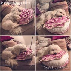 """""""Mummy is crocheting the Mandala Madness Cal She is making a round pillow with it. It is very comfy! Cotton De Tulear, Cal 2016, Round Pillow, Cushions, Pillows, Crochet Doilies, Namaste, Weaving, Cute Animals"""