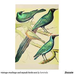 vintage starlings and mynah birds no2 metal photo print