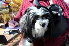 VOTE NOW for your favorite costume! - Doggie Costume Contest at the Woodstock Farmers Market. http://www.woodstockfarmersmarket.org/costumecontest.htm