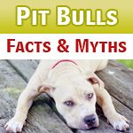 Pit Bull Myths and Facts - Inform Your Decision Before Declaring Your Position. Posted to Desert Hearts 8/9/2013 DESERT HEARTS Animal Compassion www.facebook.com/desertheartsphoenix