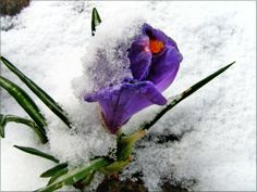 Весна пришла, а зима не торопится уходить... Content, Spring, Plants, Plant, Planets