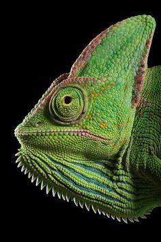 Igor Siwanowicz photos - he's got hundreds of amazing animal and insect photos.