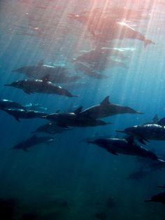 below the sun by bluewavechris, via Flickr Sea Cow, Salt Water Fish, Wild Creatures, Water Life, Sea World, Animals Of The World, Fauna, Ocean Life, Marine Life