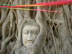 Buddha entwined by Boda tree in Ayutthaya, Thailand