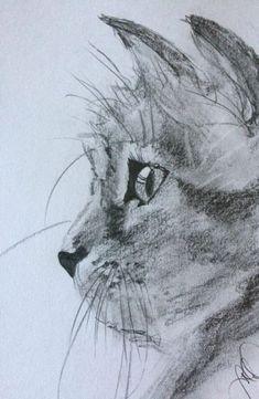 My Cat in Pencil #drawings #pencil #cats