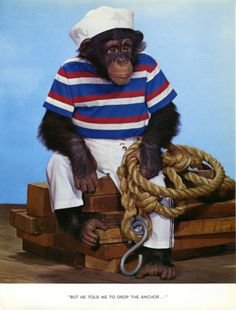 Sailor Navy Monkey Chimpanzee from Chimp Chat Book