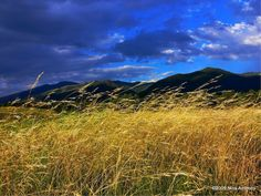 Crested Wheat Grass Swaying in the Breeze by Nina Anthony
