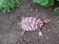 ŽELVA Turtle, Animals, Atelier, Turtles, Animales, Animaux, Tortoise, Animal, Animais