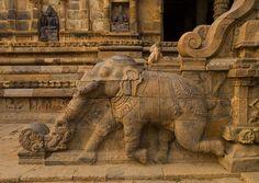 Rock Cut Bas Relief On The Stairs Of A Running Elephant At The Airavatesvara Temple, Darasuram, India #ivoryforelephants #elephants #stoppoaching #ivory #animals #elephanttree