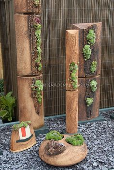 Sempervivums and sedums succulent plants in interesting containers planters by Axios Gallery.