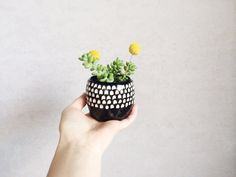 Succulent+Planter++Black+and+White+Home+Decor++by+PotteryLodge,+$25.00