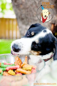 Treats are a must for a dog birthday party! Dog cakes too! #erniecakes www.erniecakes.com