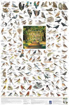 Poster Vögel auf dem Land