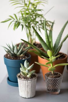 Bringing the outdoors in gives our homes life and light. The air is cleaner, the energy is better, and plants add a little pretty to our ...