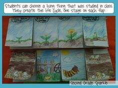 Second Grade Sparkle... Life cycle flap books that could be made after reading nonfiction text
