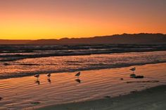 """Sunset Gulls"" - at Grover Beach (photo courtesy of Karen Rennick, Moonflower Photography)"