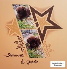 Lets Create With Lyn Holmes – AZZA European Scrapbooking (Perth – Western Australia) Dog Scrapbook, Scrapbook Pages, Scrapbook Templates, Scrapbooking Layouts, Dog Paw Drawing, Happy New Year Friends, Perth Western Australia, Christmas Activities For Kids, Funny Drawings