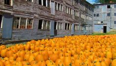 "Pumpkin conference in Vermont ""ghost town"" barracks.  Is this Halloweenish, or what?"