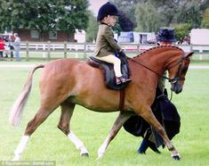 This. This is going to be my child. On form: Harry racked up a near-perfect score on Dartmoor pony divine