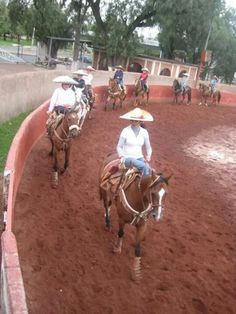 El valir y el amor. Margarita, Horses, Animals, El Amor, Animales, Animaux, Margaritas, Horse, Animal