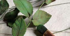 9 nuove foto di renata brocca