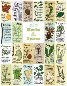 Edible Ink: Herbs & Spices | Edible Feast via Edible Tampa Bay (Illustration by Bambi Edlund) #edibleink