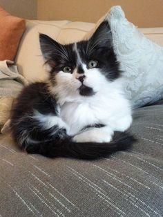 Kitten! Awww, here I go again- I want one!!