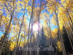 Sunshine through aspens Utah print by PhotosByCamilla on Etsy  #Utah #Sunshine #Aspens
